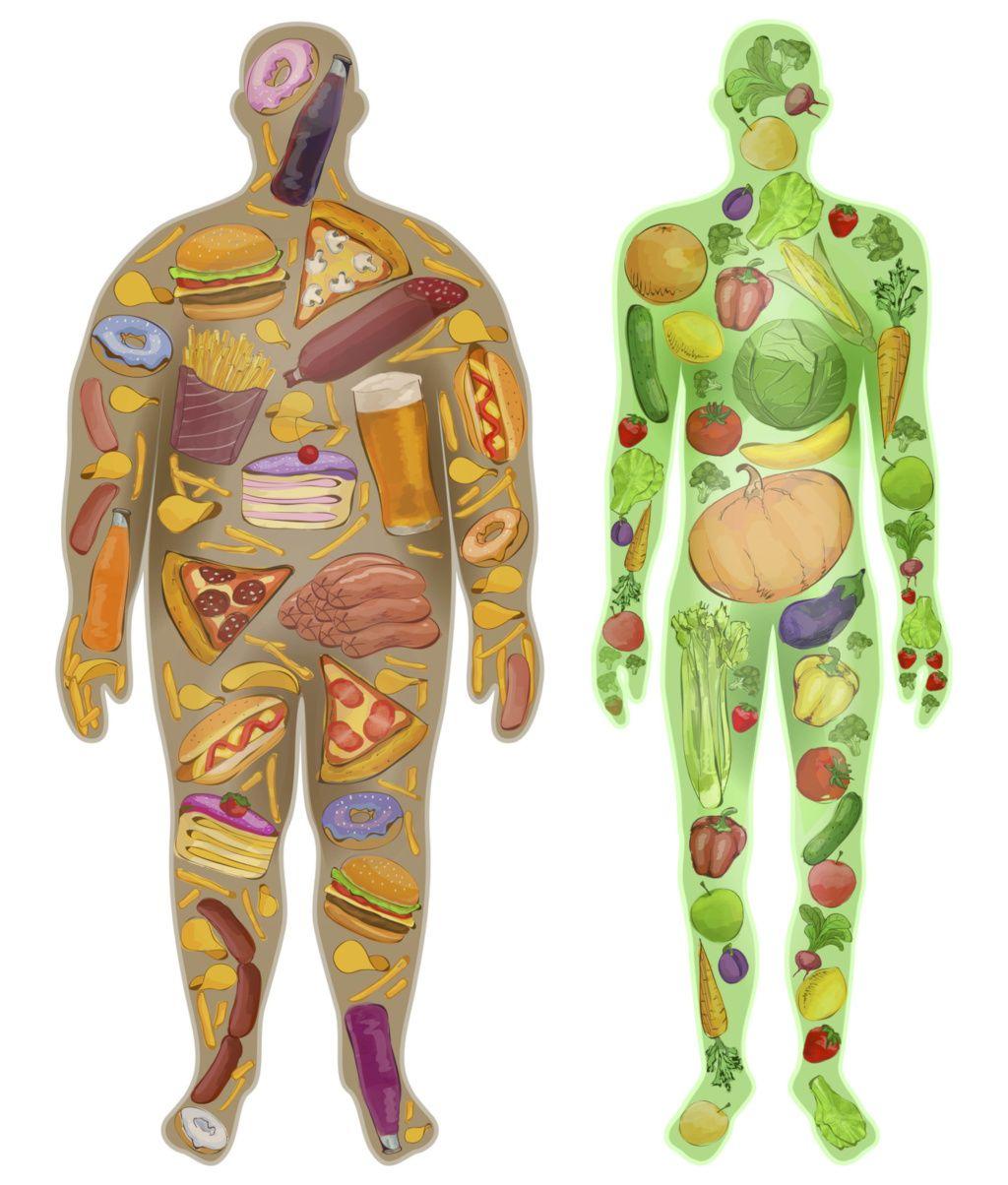 Das Bild deutet den Effekt der richtigen Ernährung auf den menschlichen Umfang und die Faszien des Menschen an